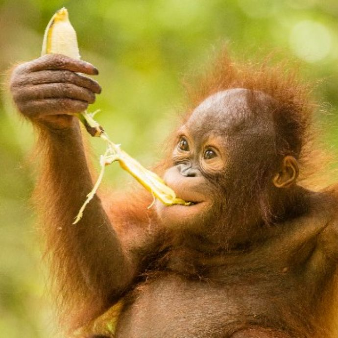 Bunch of bananas | International Animal Rescue